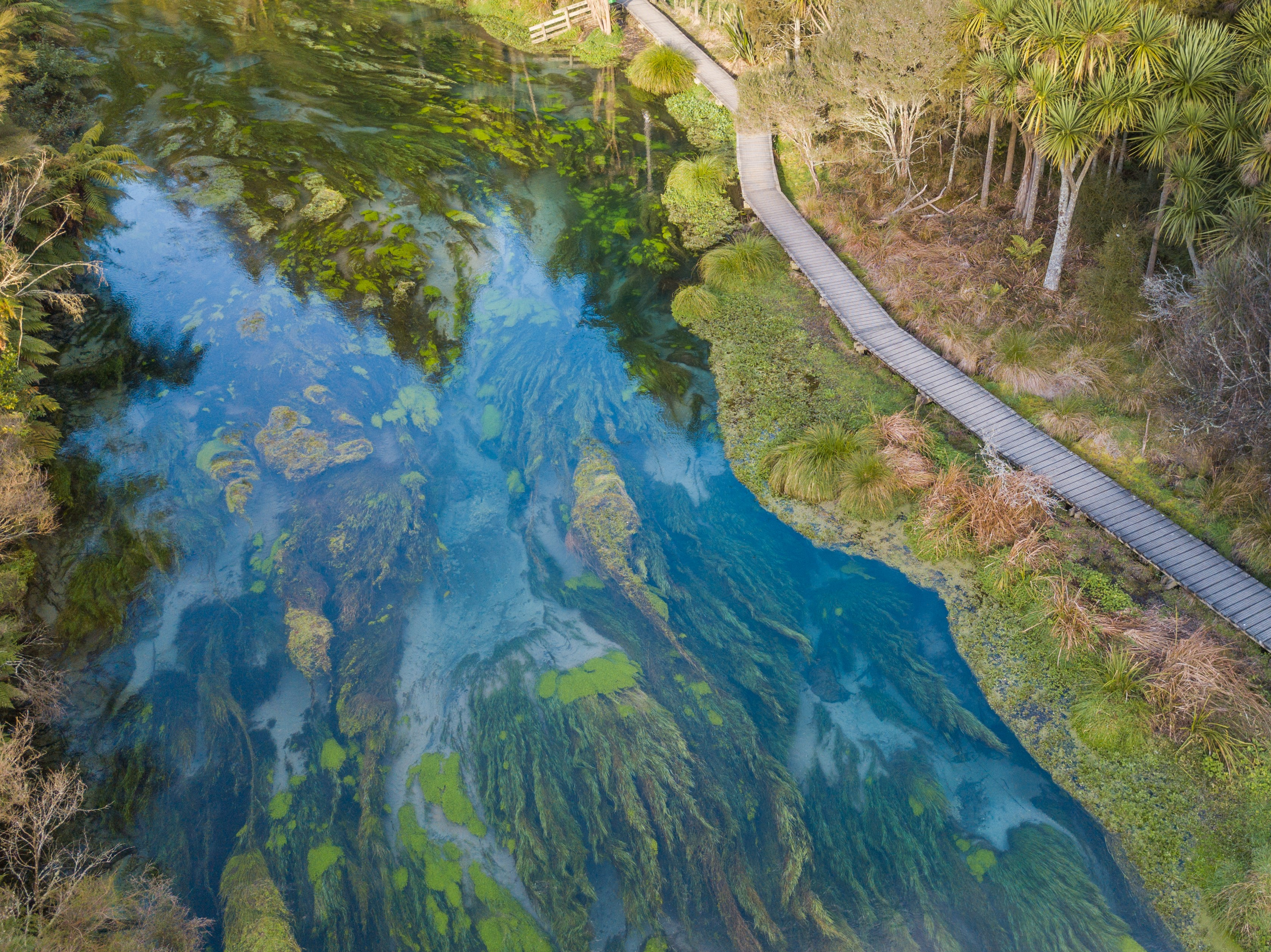 The Blue Spring and Te Waihou Walkway